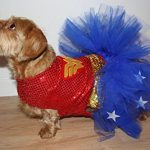 Small Dog Wonder Woman Tutu Dress Costume