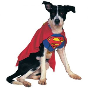 #1 Superman dog costume